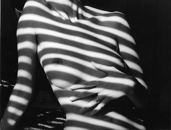 A-zebra_torso